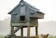 pollai | hen houses