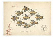 Just Bee / by Jill Marcott-McCall ~* Feathers & Flight*~