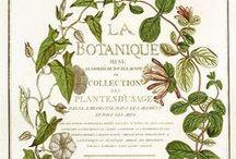 La Botanique / Antique Botanical  / by Jill Marcott-McCall ~* Feathers & Flight*~