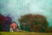 Art~ Photographic Whimsy / by Jill Marcott-McCall ~* Feathers & Flight*~