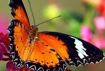 Butterflies Are Free / by Majella Maas
