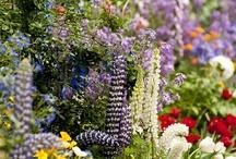 Garden/yard / by Susan Bingham