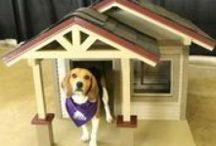 SPCA Home for the Holidays