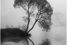 Photographie - Nature