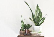 Botanical / by EmmieBean