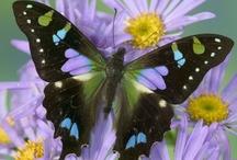 Butterflies... / by Barbara Phillips