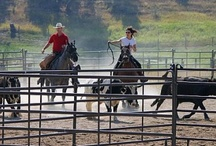 Team Penning / Cows and calves must be sorted and penned, it's a fact of ranch life. It's real life cowpoke fun too. Team penning on horseback is a fast-paced, hands-on, timed event, where a team of guests and cowhands separate individual calves from the herd and move those calves to their separate pens. Any level of horsemanship can do the job, but by the end of the event, horse, rider and calf will savor the rewarding glow of accomplishment.