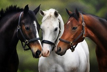 Horses... / by Barbara Phillips