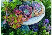 Succulents / by Sherry Zhen