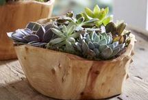 The Great Indoors / Bringing natural elements into home decor. Indoor plants and natural materials.