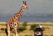 Safari Crush / by Mireya Bello-Reynoso