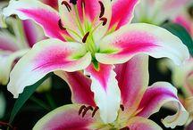 \|/ Flowers \|/