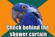 OCD Otter, Paranoid Parrot, and Socially Awkward Penguin