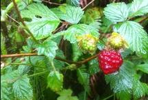Garden: Edible