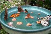 Garden: Pollinator / Gardening to attract the birds, bees, butterflies, bugs, and bats.