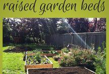 Vegetable garden / by Stephanie Wisness