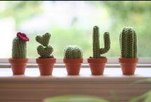 Crochet Cactus & Plants / by Marcia Scarpelli