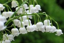Flower Power ~ Lily of the Valley / delicate white bells full of fragrance joyful hope of summer to come