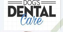 Pet Dental Health Tips