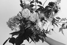 Black & White Aesthetic / These are the pictures I have ordered and put up on my wall. There are som elements of color so it's not all just black and white. I accidentally created it on the wrong account so my real account is a collaborator.