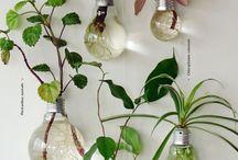 Fina växter / En samling av växter som är fina och inspirerande, roliga och coola.