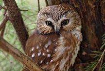 Owls ;) / by Alaina Penney