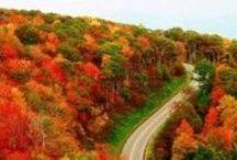I Love Calling North Carolina Home / by Judith Harris