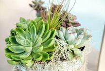 Gardening / by Jeanetta Gregory