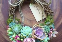 Succulents / The most awesome collection of ideas and clever ways to grow and display your succulents. If you did not cluster them before...I'm sure you'll start after having a squizz.