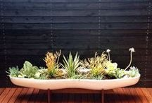 container gardening with eco deck tiles by eco arbor designs / This board is about the container gardening trends for patios, roof decks and balconies.  Our deck tiles make a great floor,  now what do you do on top?