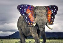 Animal hybrids / All equally terrifying