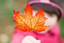 Autumn Beauty / by Rachel {Real Girls, Real Faith}