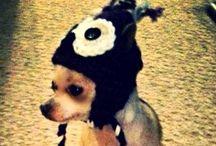 """Ideas para el """"perro"""" / by CHio"""