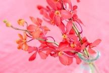 Blooming Mahhhvelous
