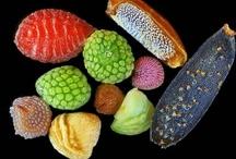 Seeds, Nuts, Flowerings, Becomings