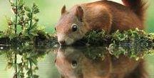 #Animals / Ebben a táblában aranyos állatokat gyűjtök
