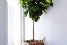 garden-indoor