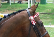 Beautiful browbands / Beautiful bling browbands and other for ponies and horses and their people