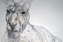 Sketch Animals / Animals. Sketched, or waiting to be sketched. / by Chris Vertonghen