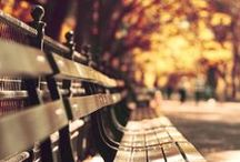 """Harvest / """" Life starts all over again when it gets crisp in the Fall."""" F. Scott Fitzgerald. / by Nicole Marie"""