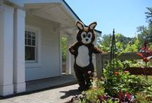 Westerville:  Then & Now / The Library's mascot, Booker the Bunny, takes us on a tour of some of the oldest buildings in Westerville.