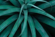 Green / #green #colour #color