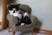 Adorable cats / Because everyone needs more adorable cats in their life. Most pictures courtesy of @patricknaish.