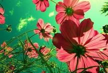 Flowers  / by Brianna Kadlec