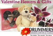 Valentine Gifts from Drummers Floral 2013
