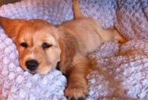 Pups / Best animals on earth, mans best friend, dogs, puppies, doggies, cute, pets
