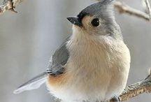 Ptáci - Birds / Small, flying jewels.