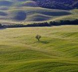 Visit Tuscany / The best places you can see staying at La Lisa: Cortona, Lake Trasimeno, Rapolano Terme, Montepulciano, Pienza, Asciano (Crete Senesi), Montalcino, Anghiari, Sansepolcro, San Gimignano, Chianti Region, Valdorcia Region. Here are some distances: Foiano della Chiana (2 km) - Valdichiana Outlet Village (4 km) - Arezzo (35 km) - Siena (50 km) - Perugia (60 km) - Firenze (100 km) - Pisa (183 km) - Roma (188 km)