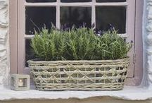 Nordic House - Garden Things / by Nordic House