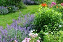 Landscape Backyard, Sideyard & Garden / by Penny Thompson